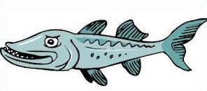 barracuda clipart